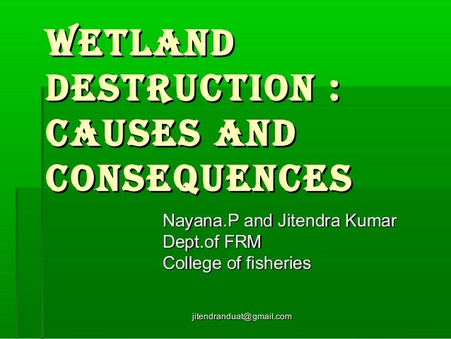 Wetland destruction : causes and consequences Nayana.P and Jitendra Kumar Dept.of FRM College of fisheries jitendranduat@g...