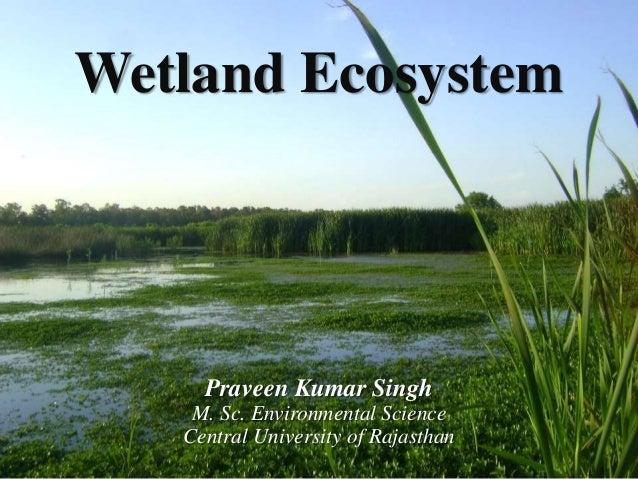 Wetland Ecosystem Praveen Kumar Singh M. Sc. Environmental Science Central University of Rajasthan