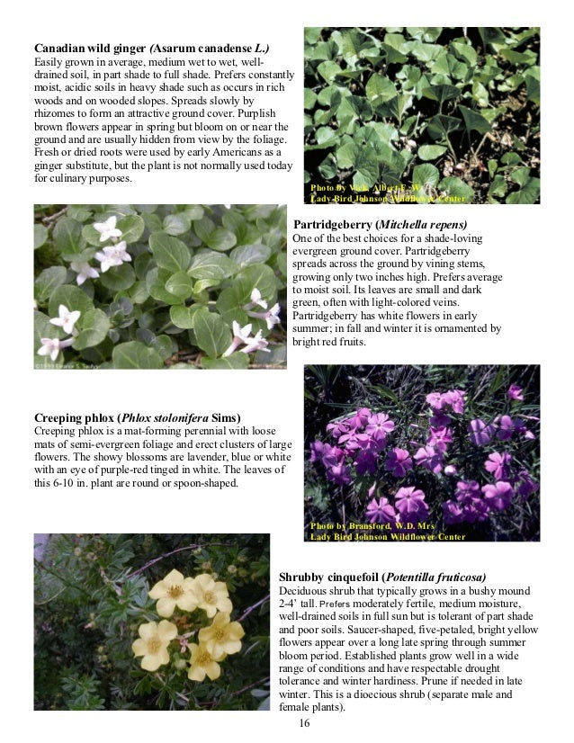 Plants for Gardening in Wet and Wooded Areas - Connecticut