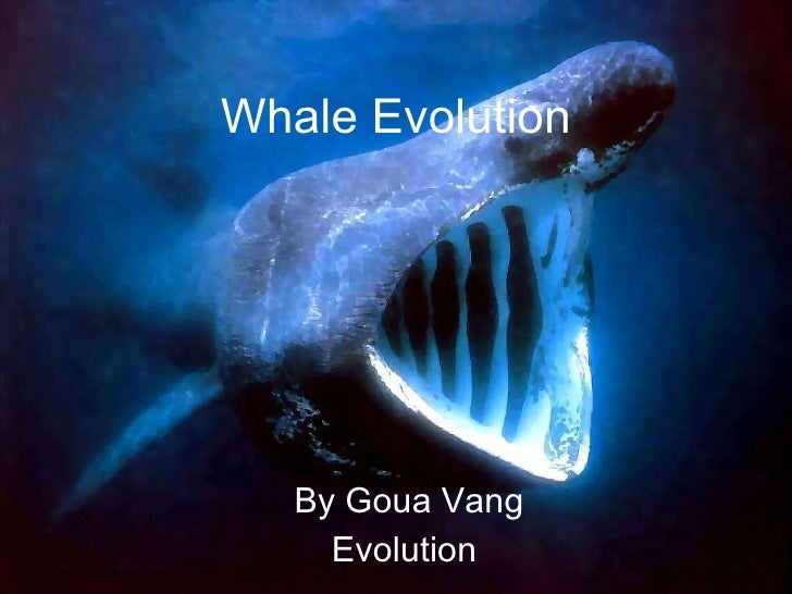 Whale Evolution By Goua Vang Evolution