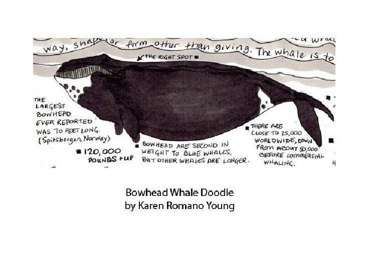 Bowhead Whale Doodle