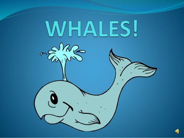 What is a whale?  A whale is a large fish found in the ocean.  It is also a MAMMAL, just like us!  Mammals are warm-blo...