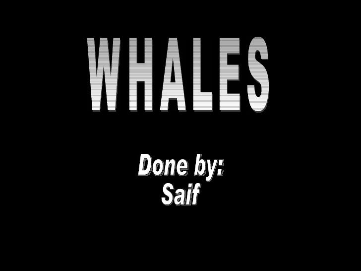 WHALES Done by: Saif