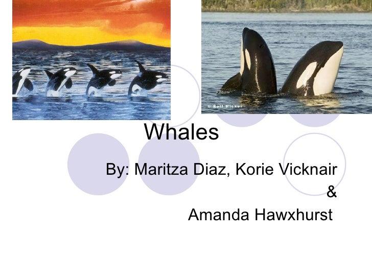Whales By: Maritza Diaz, Korie Vicknair & Amanda Hawxhurst