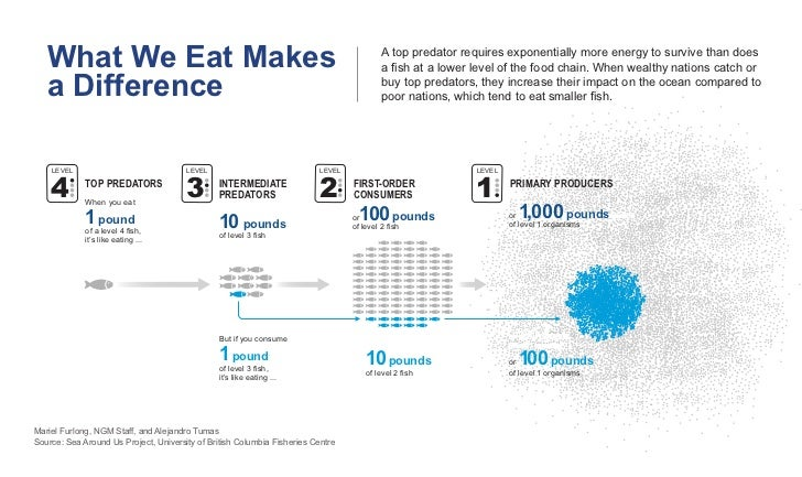 What We Eat Makes                                                                      A top predator requires exponential...