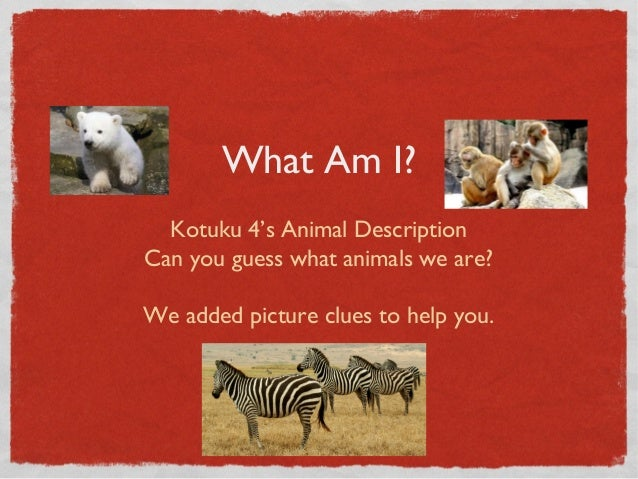 What Am I?Kotuku 4's Animal DescriptionCan you guess what animals we are?We added picture clues to help you.