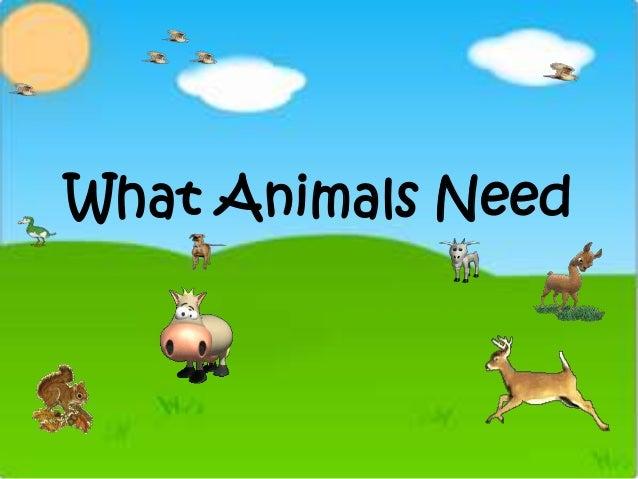 What Animals Need