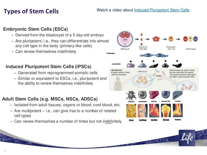 how to start a discussion about stem cells