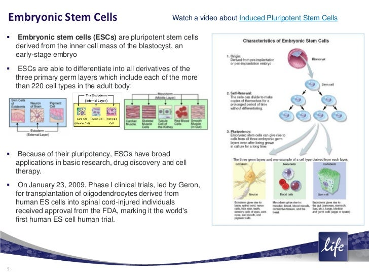essays on embryonic stem cell research Pros and cons of stem cell research - understand the positive and negative effects of this research learn about adult cells, cord cells, and embryonic cells.