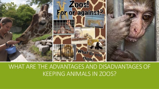 advantage ang disadvantage of animals in The pros and cons of animal testing the advantages and disadvantages of animation experimentation.