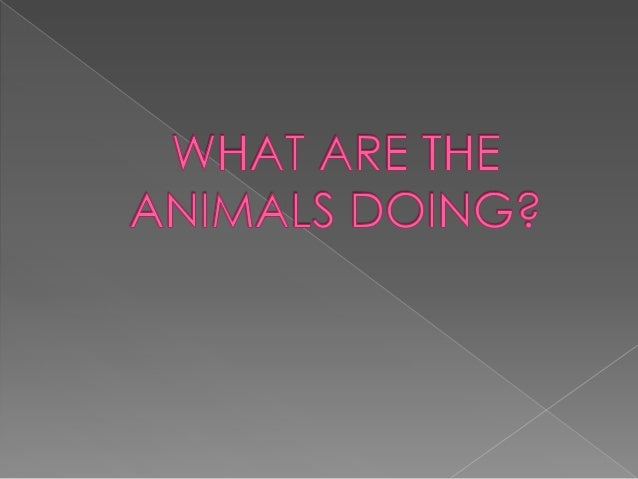 What are the animals doing?