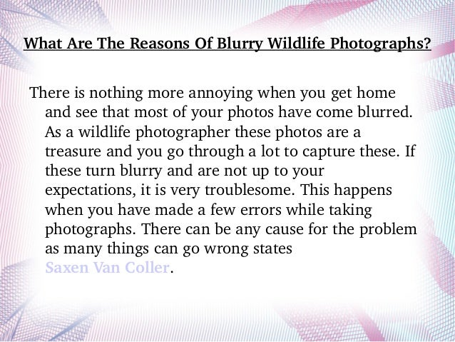 What Are The Reasons Of Blurry Wildlife Photographs? There is nothing more annoying when you get home  and see that most o...