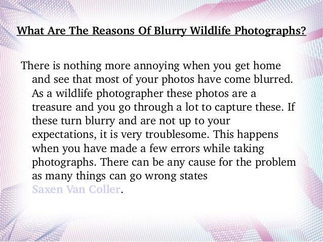WhatAreTheReasonsOfBlurryWildlifePhotographs? Thereisnothingmoreannoyingwhenyougethome andseethatmosto...