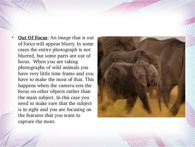 What are the reasons of blurry wildlife photographs? Slide 2