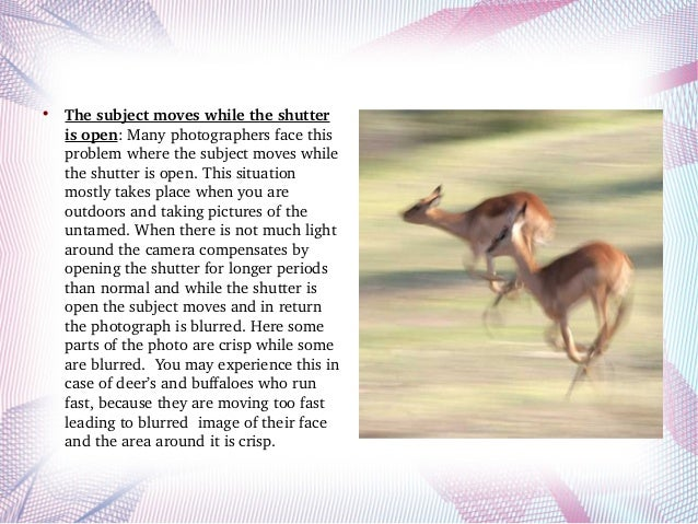 What are the reasons of blurry wildlife photographs? Slide 3
