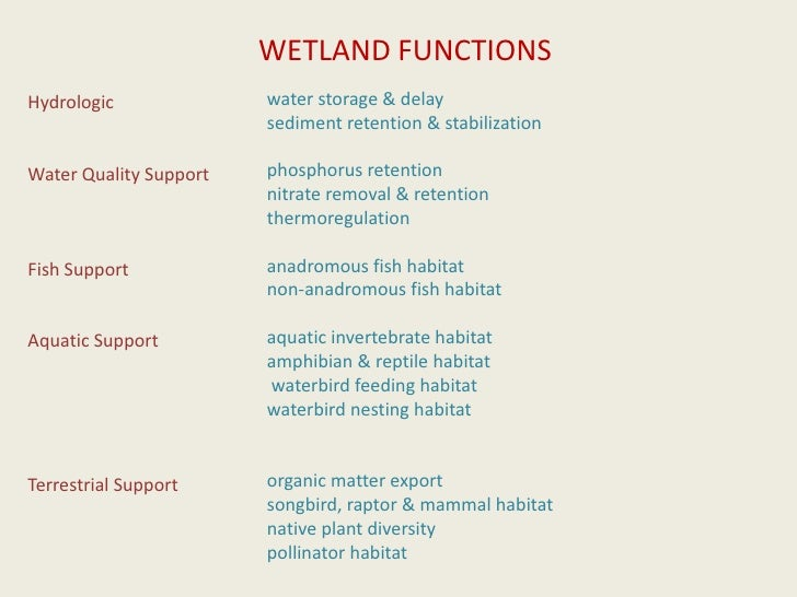 WETLAND FUNCTIONS<br />water storage & delay <br />sediment retention & stabilization<br />phosphorus retention <br />nitr...