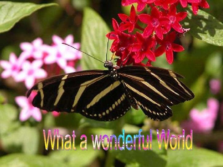 What a wonderful World<br />