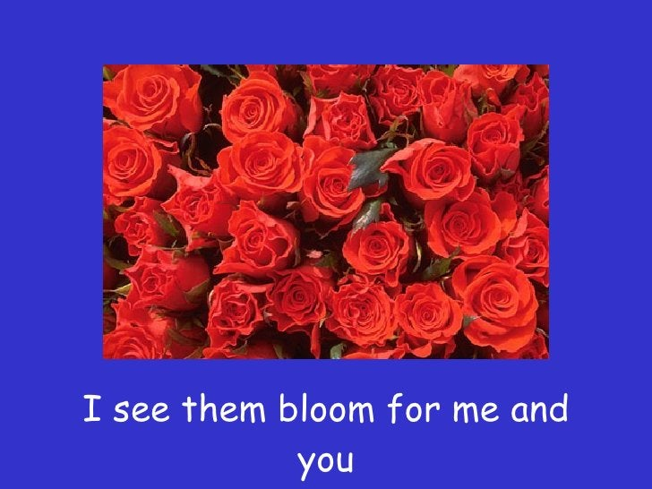 I see them bloom for me and you
