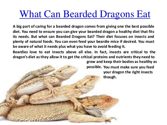 What Kind Of Food Do Bearded Dragons Eat