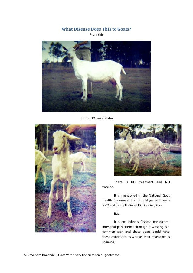 goat cae Caprine arthritis-encephalitis virus (caev) is an incurable disease of goats that   cae status in goat herds in part of the midwest united states region.