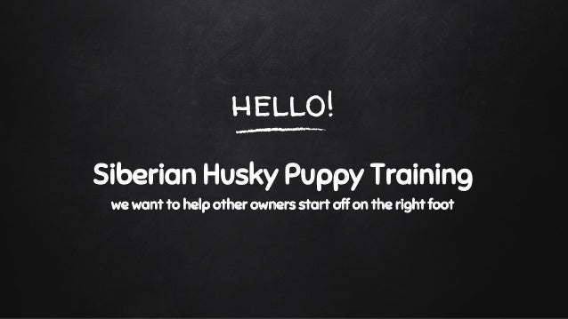 What Does A Siberian Husky Puppy Eat What Is The Best Dog Food For