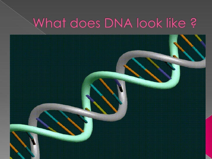 Whatdoes DNA look like ?<br />