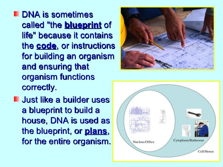 What does dna look like dna is sometimescalled the blueprint malvernweather Choice Image