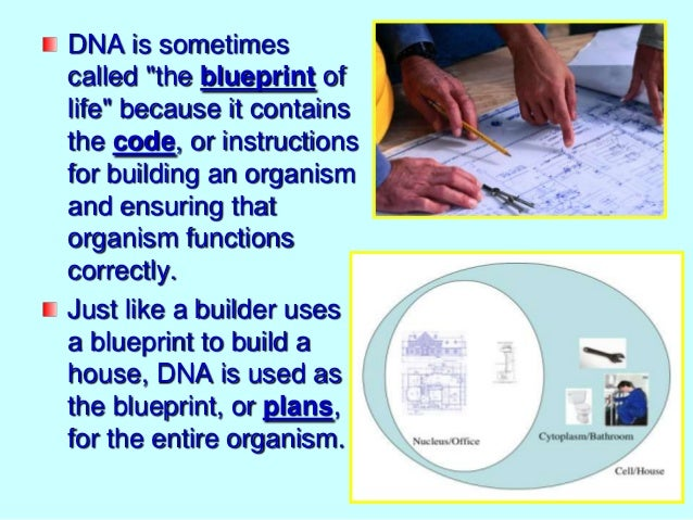 What does dna look like notes dna is sometimes called the blueprint of life malvernweather Choice Image
