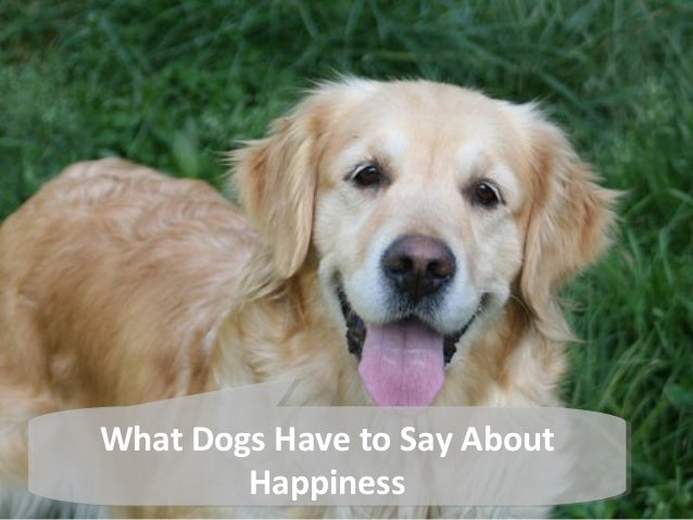 What Dogs Have to Say About  What Dogs Have to Say About  Happiness  Happiness