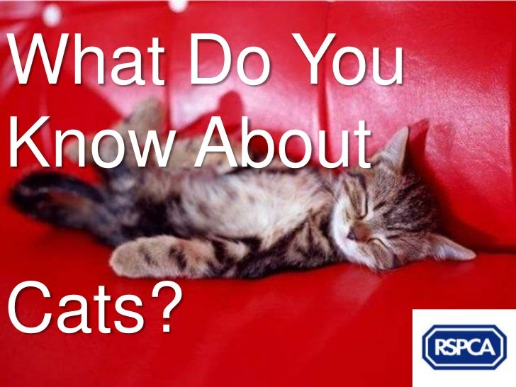 What Do YouKnow AboutCats?
