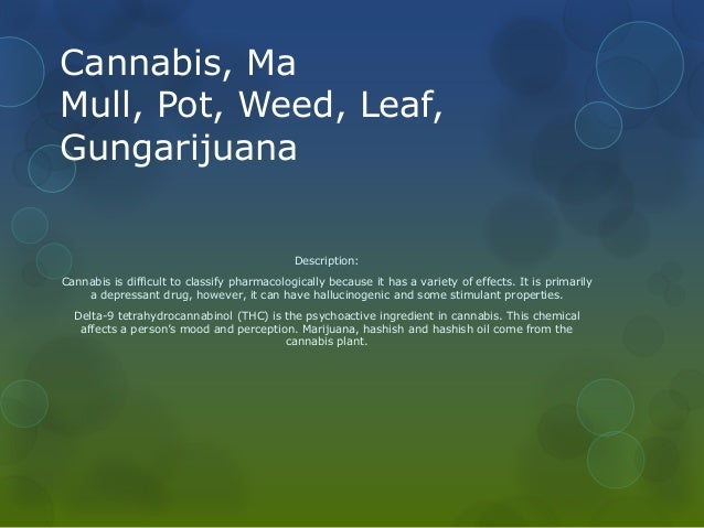 a description of marijuana as a drug that comes from the plant cannabis Each dutch passion cannabis seed variety comes with a full description  marijuana seeds regular cannabis seeds  cannabis buds per plant buy cannabis seeds.