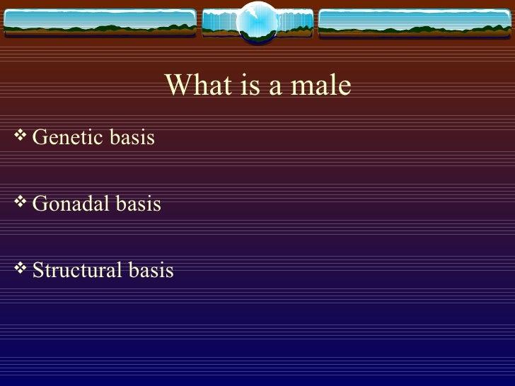 What is a male <ul><li>Genetic basis </li></ul><ul><li>Gonadal basis </li></ul><ul><li>Structural basis </li></ul>