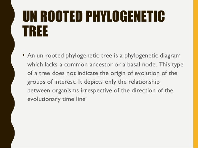 Phylogenetic Tree Types And Applicantion