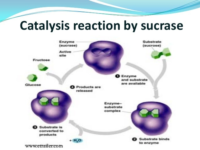 enzyme catalysis This video will discuss the basics of chemical reactions and the functions of enzymes as a catalyst teachers: this powerpoint can be purchased from my online store.