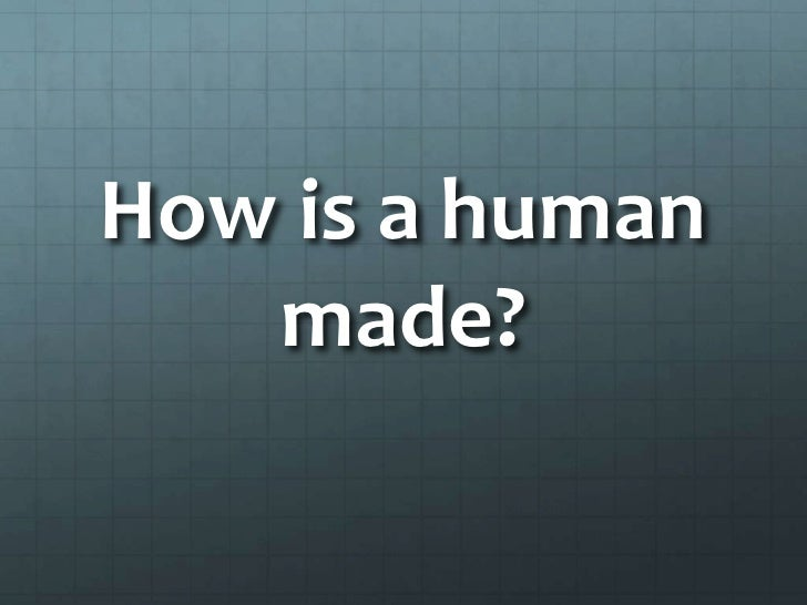 How is a human   made?