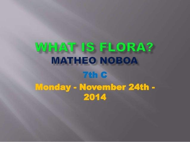 7th C  Monday - November 24th -  2014