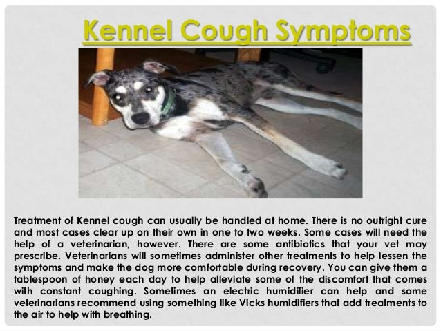 How To Cure Kennel Cough In Dogs