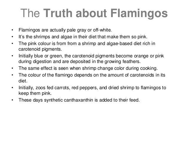 The Truth about Flamingos • Flamingos are actually pale gray or off-white. • It's the shrimps and algae in their diet that...