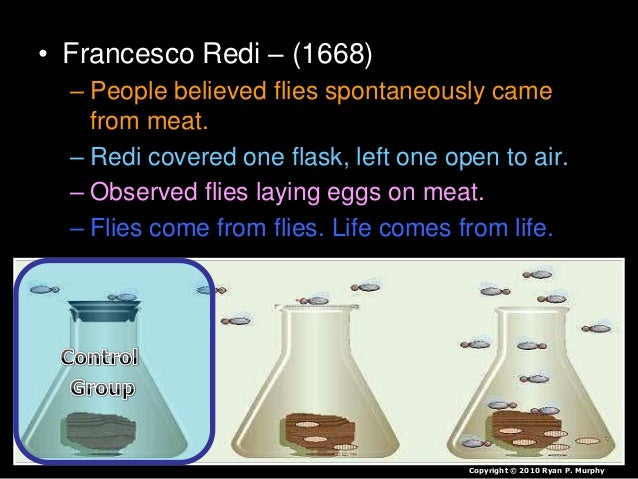 • Francesco Redi – (1668) – People believed flies spontaneously came from meat. – Redi covered one flask, left one open to...