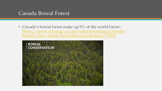 Canada Boreal Forest • Canada's boreal forest make up 9% of the world forest - https://www.nrcan.gc.ca/our-natural-resourc...