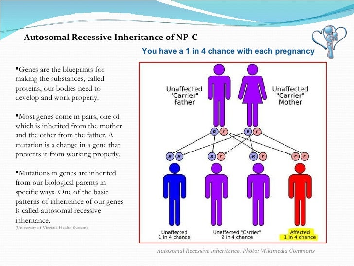 Autosomal Recessive Inheritance. Photo: Wikimedia Commons Autosomal Recessive Inheritance of NP-C You have a 1 in 4 chance...