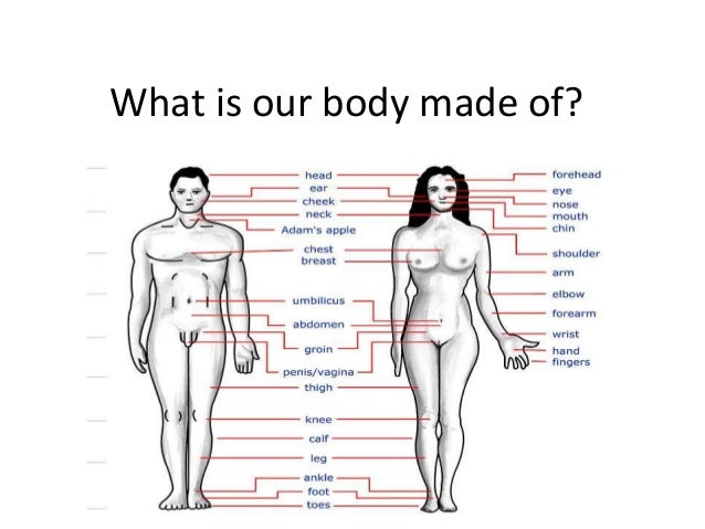 What is our body made of?