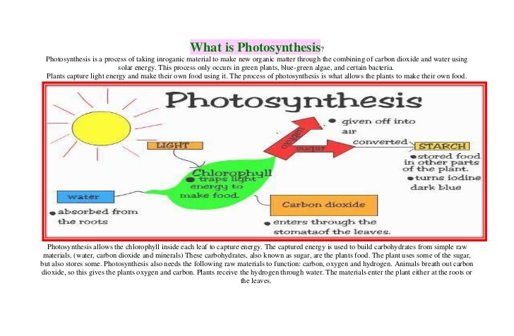 What is photsynthesis