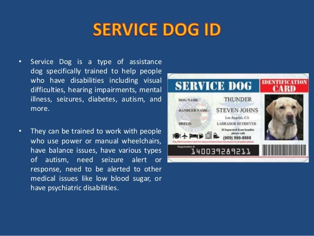 Types Of Mental Disabilities For Service Dog