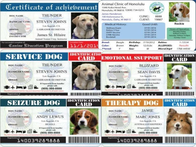 photo regarding Free Printable Service Dog identified as What is company doggy identification and why your self will need services canine identity ?