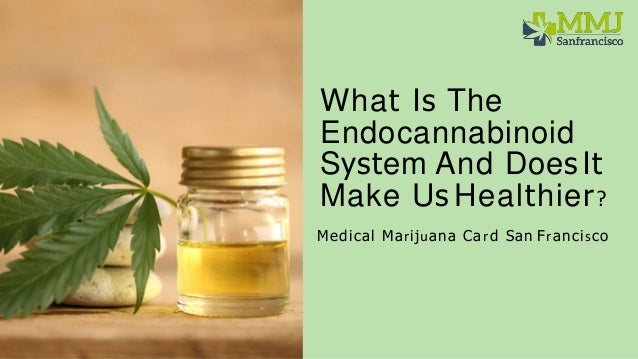 What Is The Endocannabinoid System And Does It Make Us Healthier? Medical Marijuana Card San Francisco