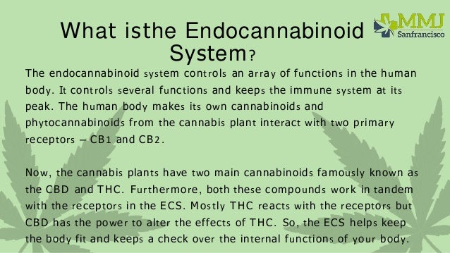 What is the endocannabinoid system and does it make us healthier  Slide 3