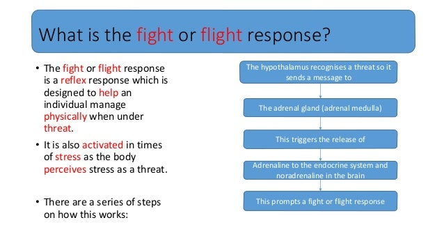 The fight or flight response: Our body's response to stress