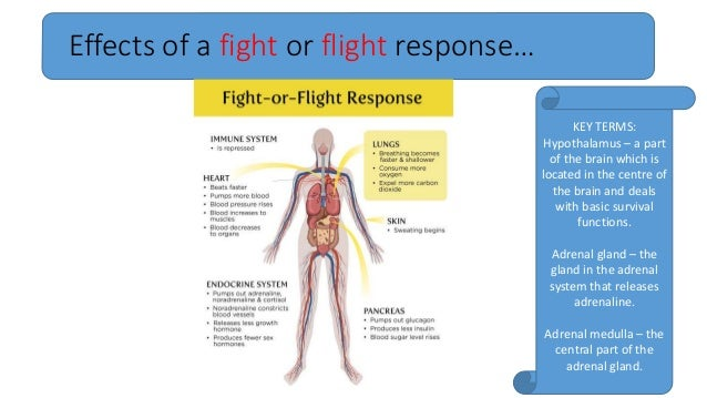 What Is The Fight Or Flight Response Final