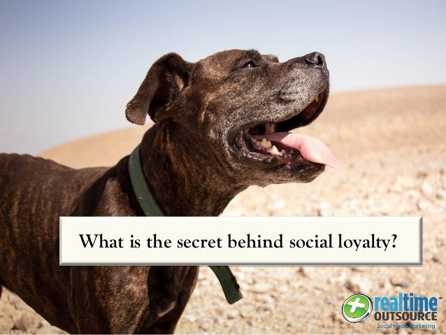 What is the secret behind social loyalty?